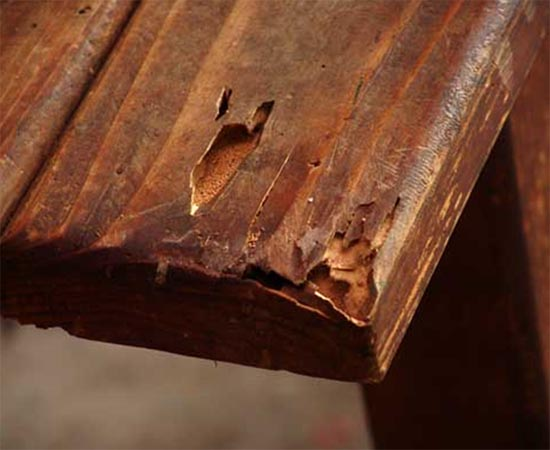 Top 3 Termite Damage Repair Options And Some Handy Tips Bugs Zapper