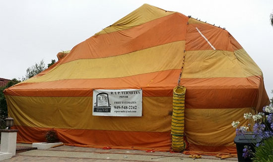 Termite Fumigation Safety Issues You Should Be Aware Of Bugs Zapper